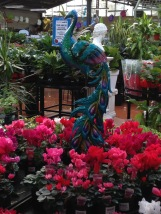 Peacock and cyclamen